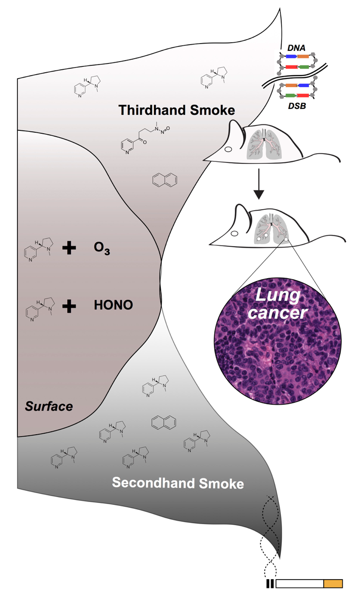 Graphic showing DNA effects of chemicals in cigarette smoke deposits